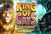 King of Cats Online Slot